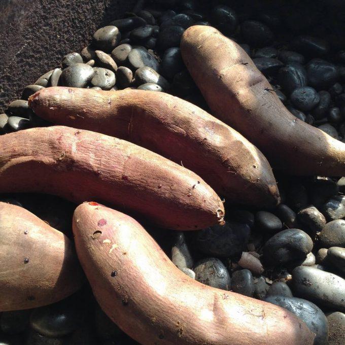 おいしい焼いもは好みの品種と焼き方がポイント